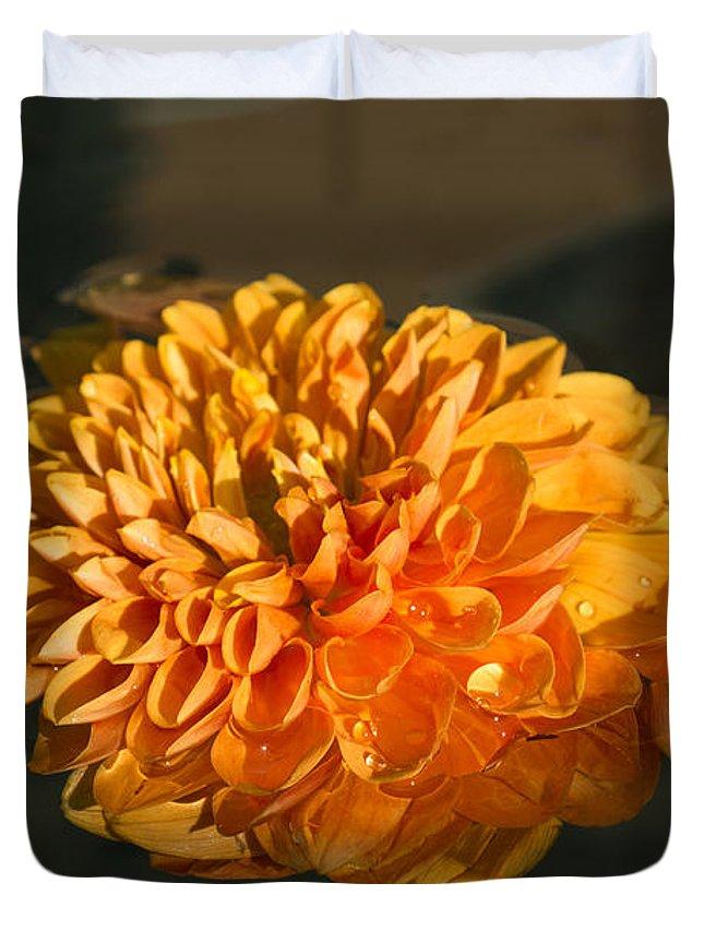 Georgia Mizuleva Duvet Cover featuring the photograph Chrysanthemum Gently Floating In The Fountain Of Campo De Fiori - Rome - Italy by Georgia Mizuleva