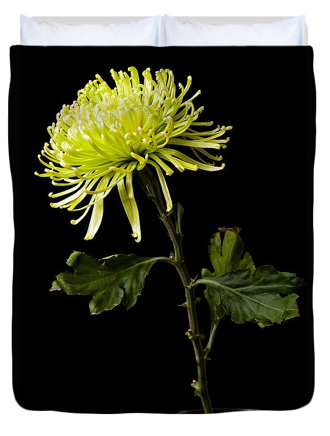Green Duvet Cover featuring the photograph Chrysanthemum by Sennie Pierson