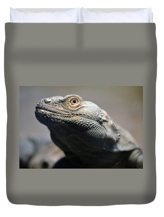 Chuckwalla Duvet Cover featuring the photograph Chuckwalla by Richard Bryce and Family