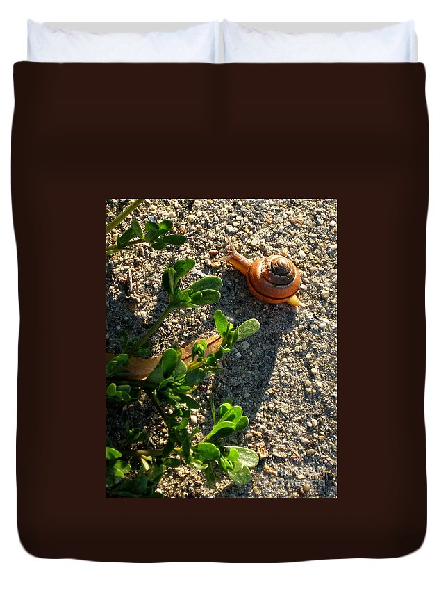City Duvet Cover featuring the photograph City Snail From Above by Kenny Glotfelty