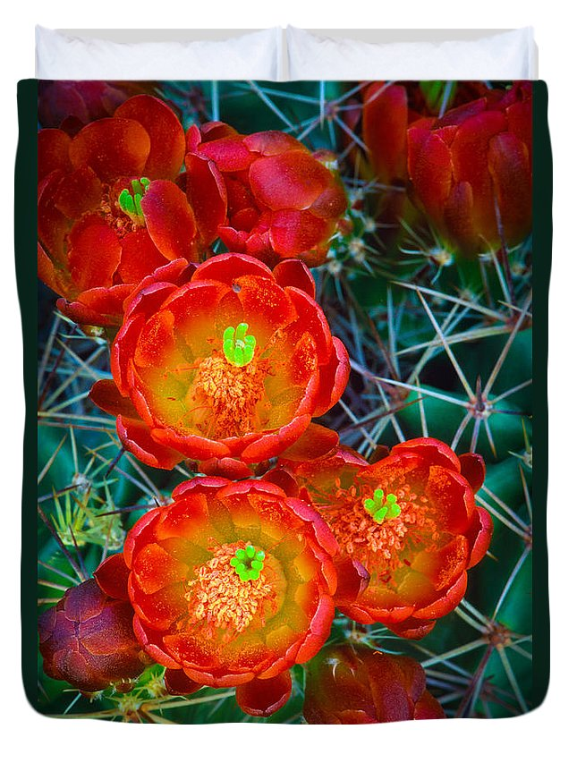 America Duvet Cover featuring the photograph Claret Cup by Inge Johnsson