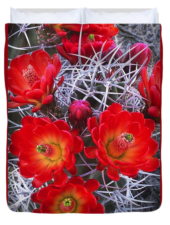 Claretcup Cactus Duvet Cover featuring the photograph Claretcup Cactus In Bloom Wildflowers by Dave Welling