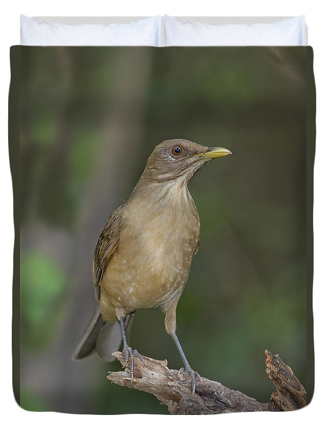 Clay-colored Thrush Duvet Cover featuring the photograph Clay-colored Thrush by Anthony Mercieca