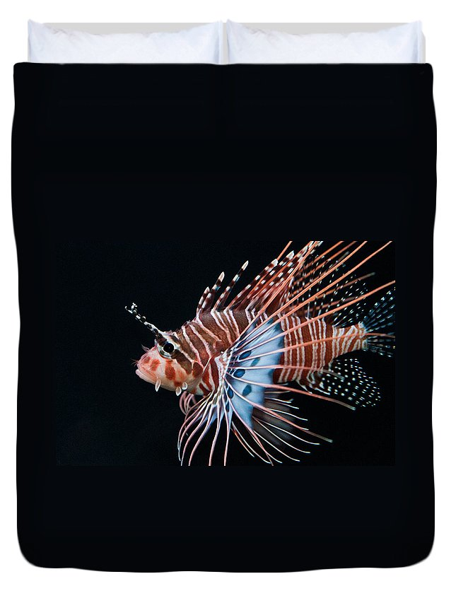 Lionfish Duvet Cover featuring the photograph Clearfin Lionfish by Don Johnson