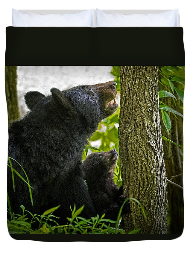 Bear Duvet Cover featuring the photograph Climbing Lesson by Wendell Franks