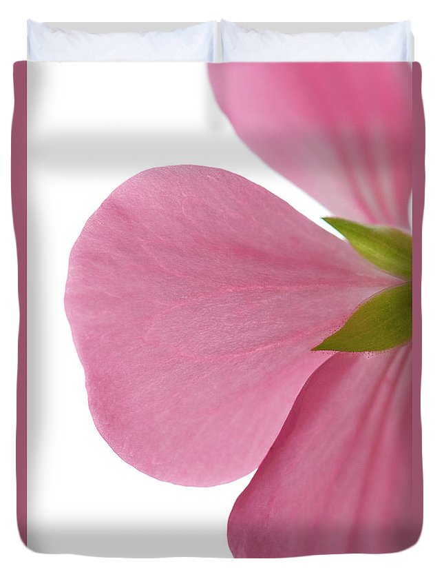 White Background Duvet Cover featuring the photograph Close-up Of Pink Geranium Flower Petals by Daryl Solomon