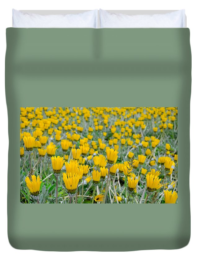 Daisies Duvet Cover featuring the photograph Closed Yellow Daisies by Alexandre Martins