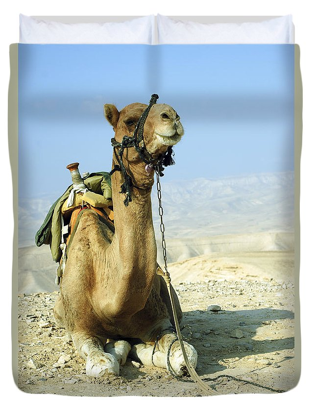 Camel Duvet Cover featuring the photograph Closeup Of A Camel by Shay Fogelman