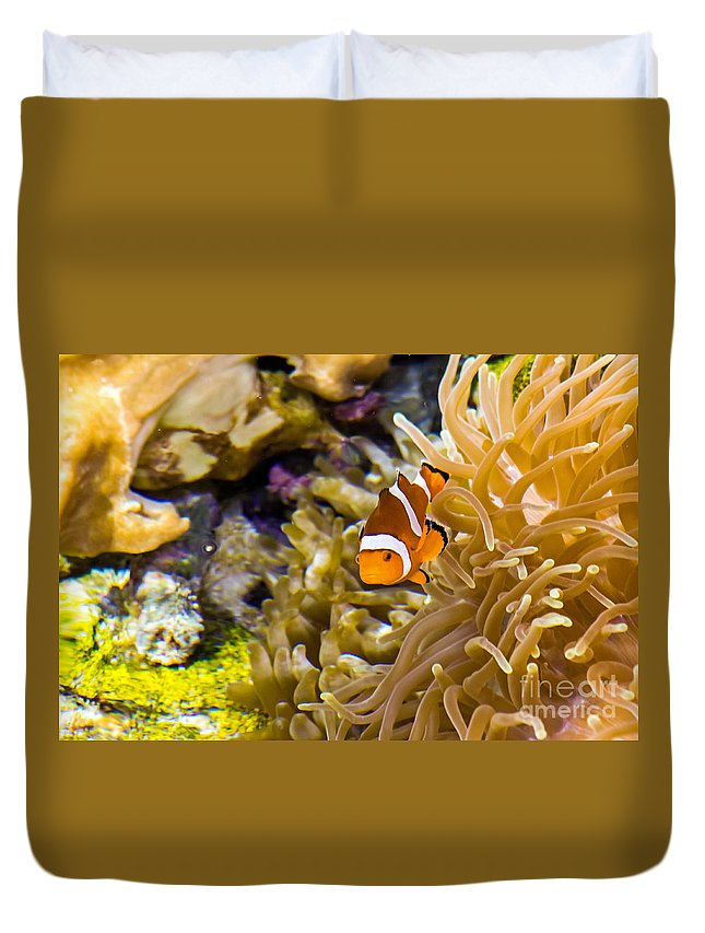 Aquarium Duvet Cover featuring the photograph Clownfish by Kate Brown