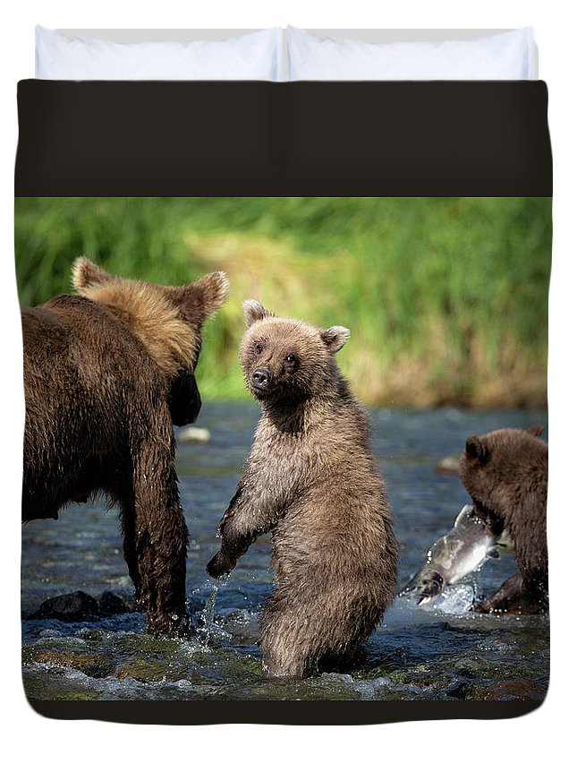 Katmai Peninsula Duvet Cover featuring the photograph Coastal Brown Bear Family by Justinreznick