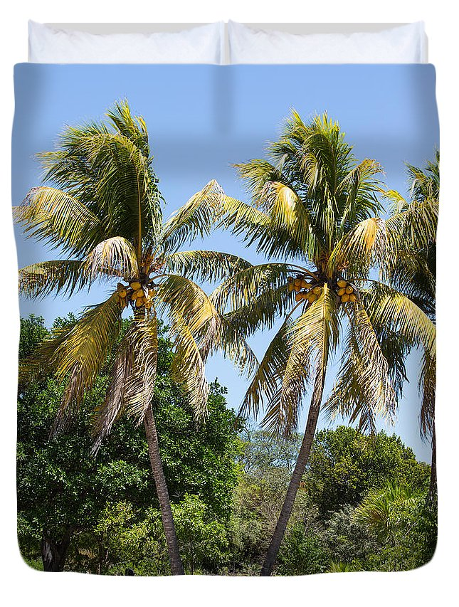 Sky Duvet Cover featuring the photograph Coconut Palm Trees In Key West by John M Bailey
