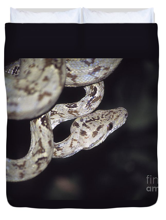 Snake Duvet Cover featuring the photograph Coiled And Waiting by James Brunker