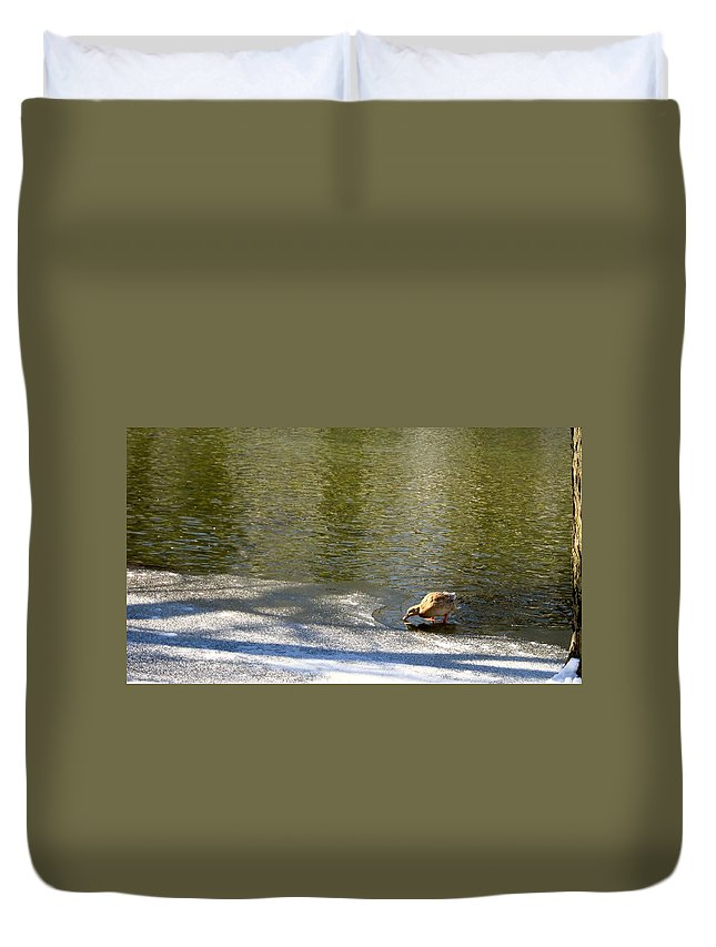 Duck Duvet Cover featuring the photograph Cold Drink by Cynthia Clark
