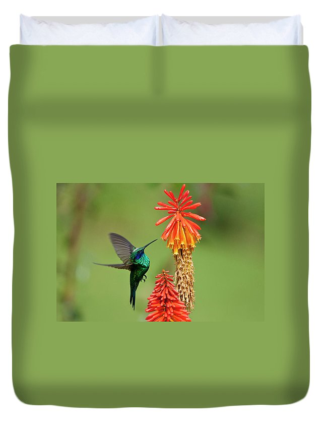 Animal Themes Duvet Cover featuring the photograph Colibri Coruscans by Photo By Priscilla Burcher