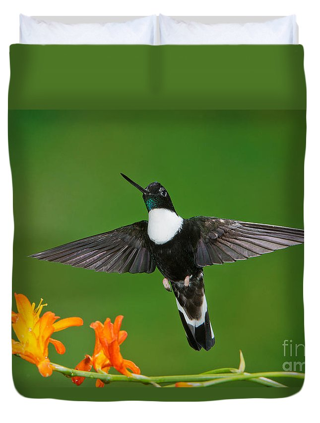 Collared Inca Duvet Cover featuring the photograph Collared Inca by Anthony Mercieca
