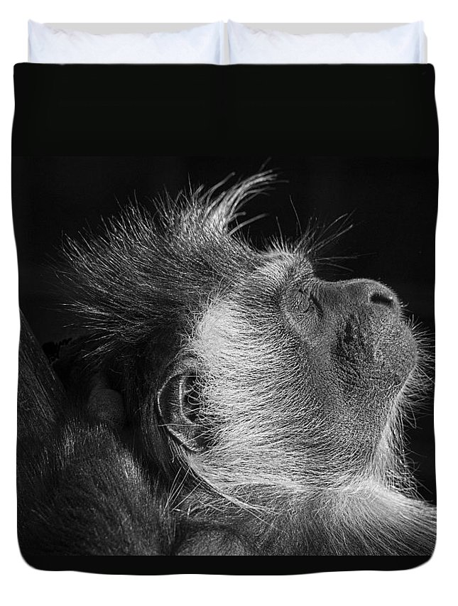 Colobus Duvet Cover featuring the photograph Colobus At Rest by James Ekstrom