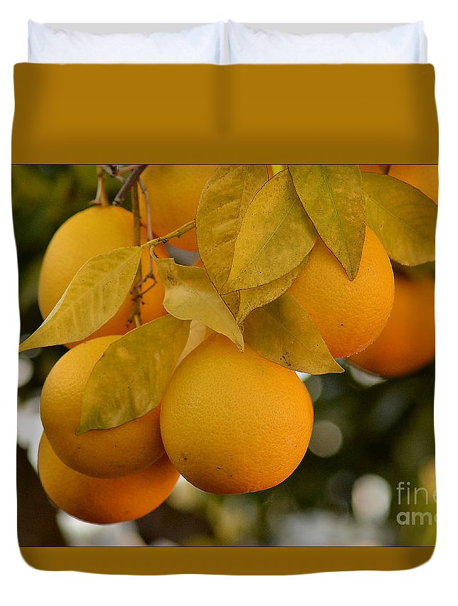 Orange Duvet Cover featuring the photograph Super Bright Oranges On A Branch by Luv Photography