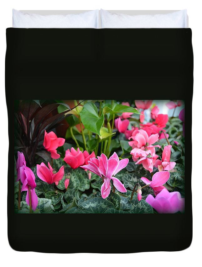 Cyclamen Duvet Cover featuring the photograph Colorful Cyclamen by Carla Parris