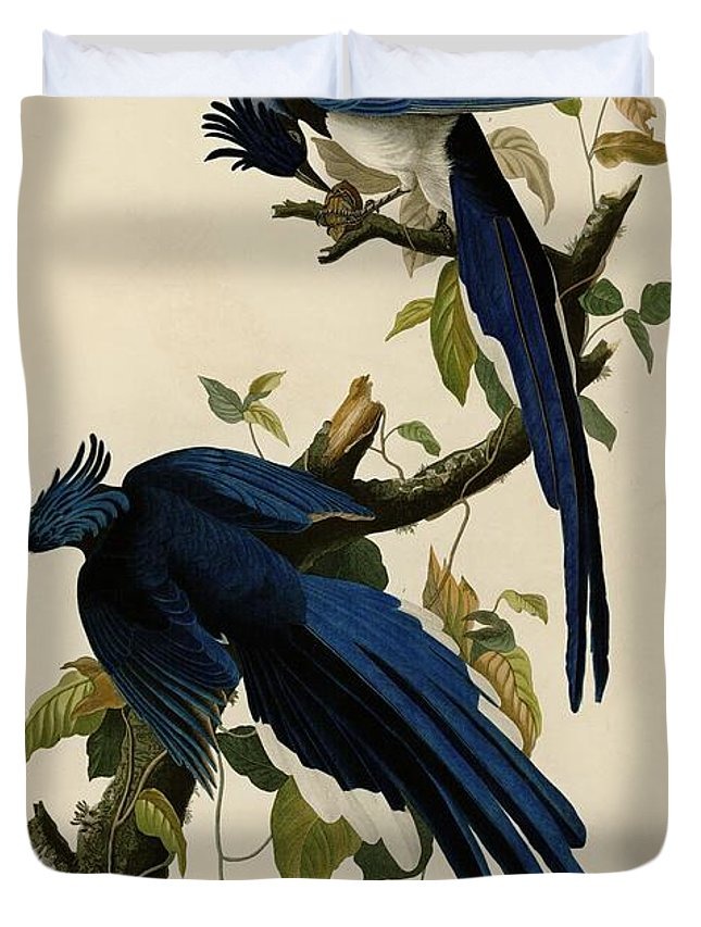 John James Audubon Duvet Cover featuring the painting Columbia Jay by Celestial Images