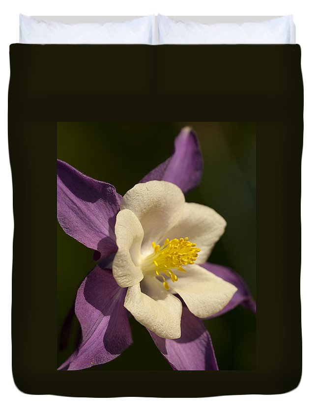 Aquilegia Duvet Cover featuring the photograph Columbine Floral by Kathy Clark