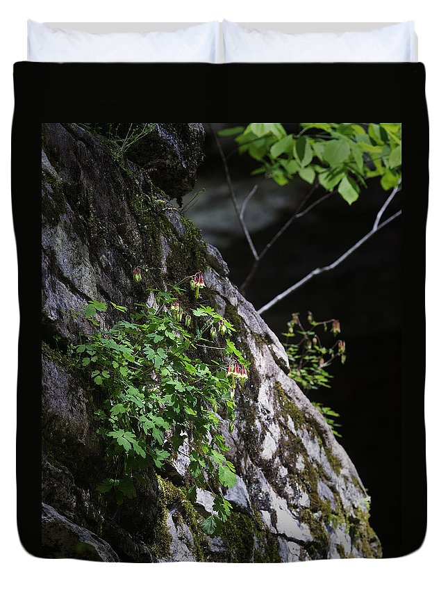 Columbine Duvet Cover featuring the photograph Columbine Flowers On River Rock by Michael Dougherty