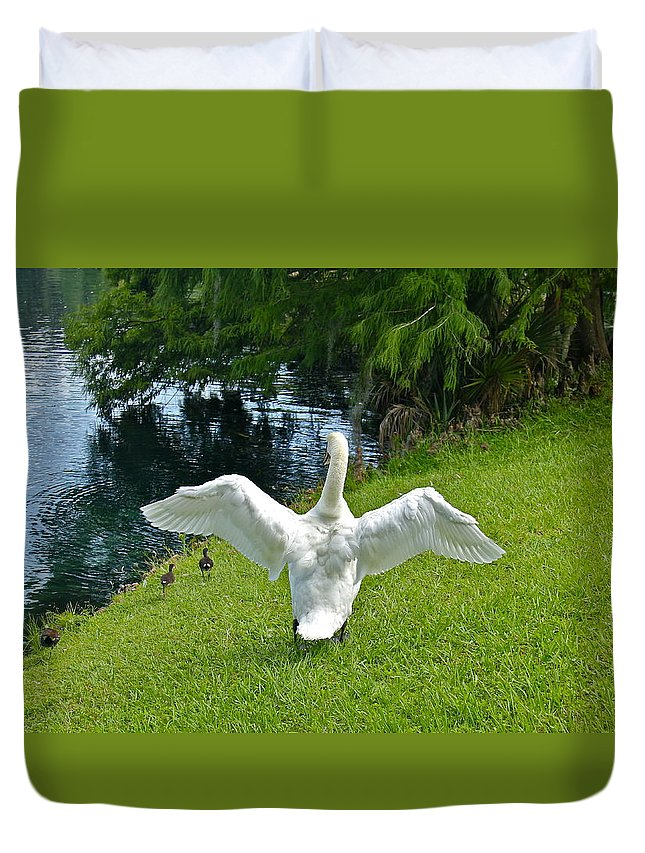 Swan Duvet Cover featuring the photograph Come On Little Ones Back In The Water by Denise Mazzocco