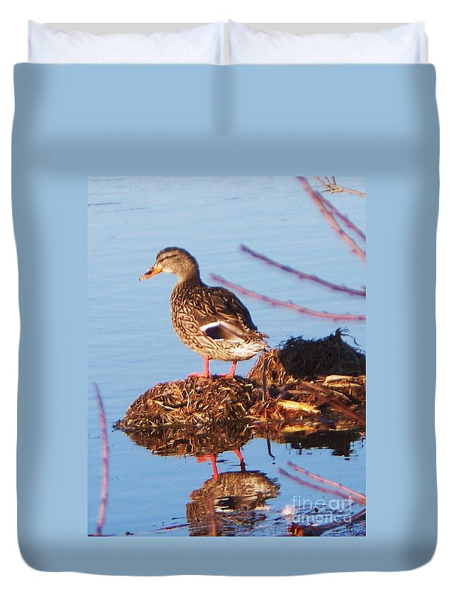 Comedian Duvet Cover featuring the photograph Comedian Duck by Eric Schiabor