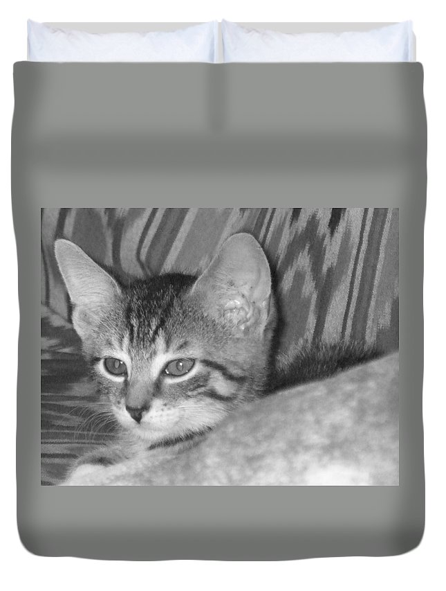 Kitten Duvet Cover featuring the photograph Comfy Kitten by Pharris Art