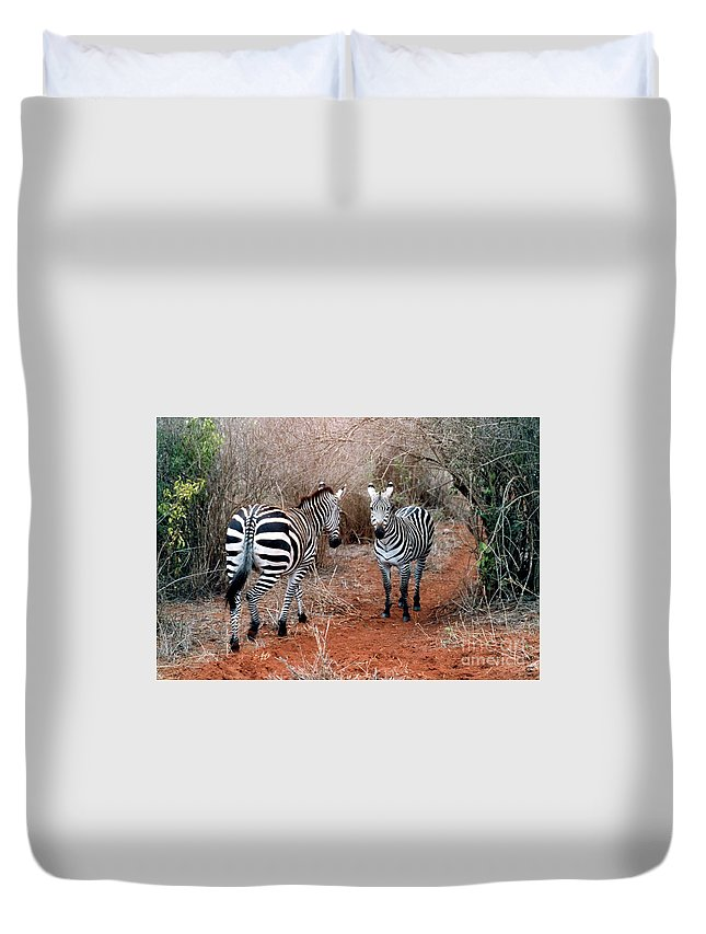2 Zebras Duvet Cover featuring the pyrography Coming And Going by Phyllis Kaltenbach