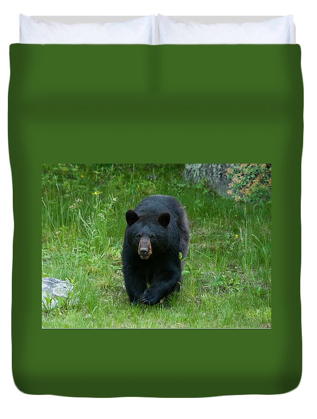 Bears Duvet Cover featuring the photograph Coming At Ya by Brenda Jacobs