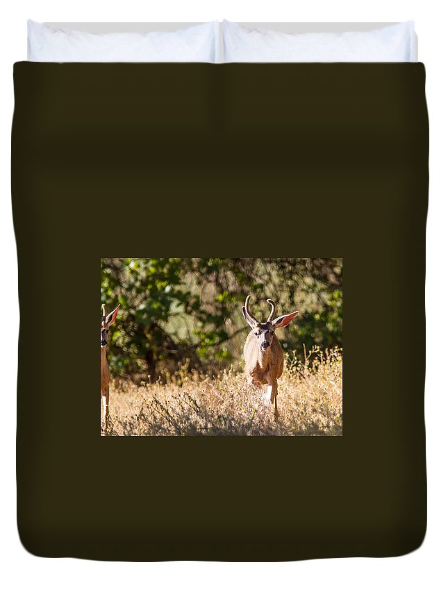 Deer Spikes Bucks Outdoors Wildlife Nature Wooded Area All Prints Are Available In Prints Duvet Cover featuring the photograph Coming Right At Me by Brian Williamson