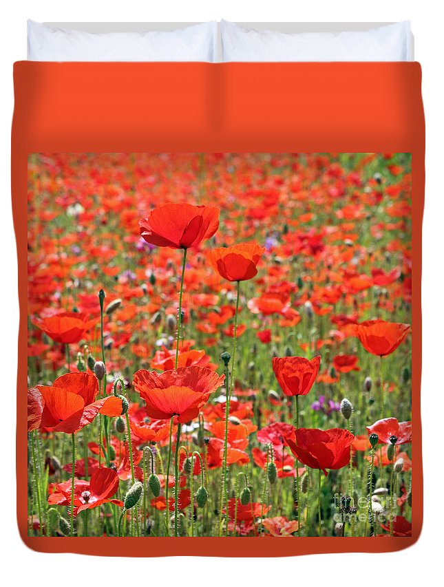 Commemorative Poppies Uk Red Flower Poppy Flowers Meadow Field Duvet Cover featuring the photograph Commemorative Poppies by Julia Gavin