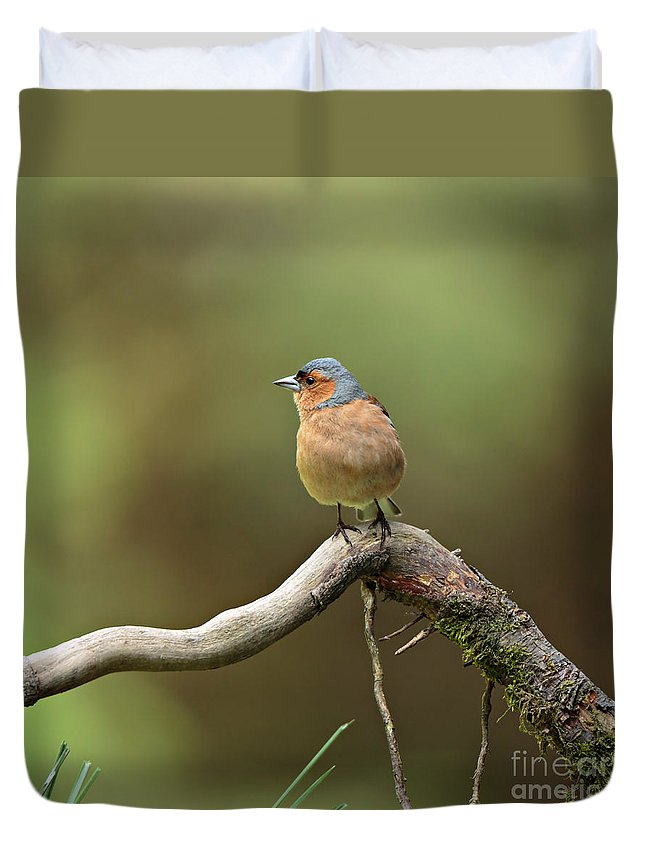 Chaffinch Duvet Cover featuring the photograph Common Chaffinch by Louise Heusinkveld