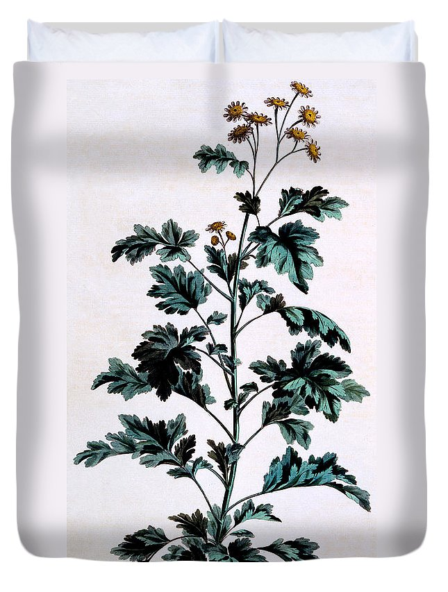 Still-life Duvet Cover featuring the painting Common Or Garden Feverfew by John Edwards