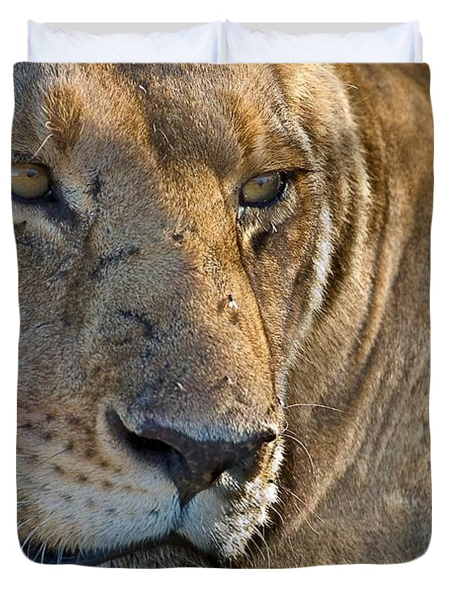 Africa Duvet Cover featuring the photograph Concentration by Colette Panaioti