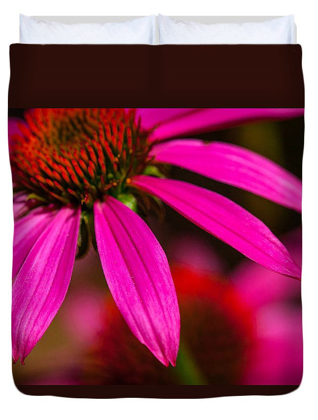 Coneflower Duvet Cover featuring the photograph Coneflower by Karol Livote