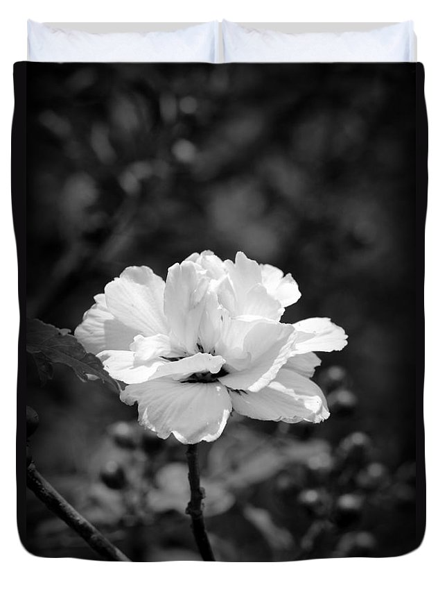 Confederate Rose Duvet Cover featuring the photograph Confederate Rose Bw by Beth Vincent