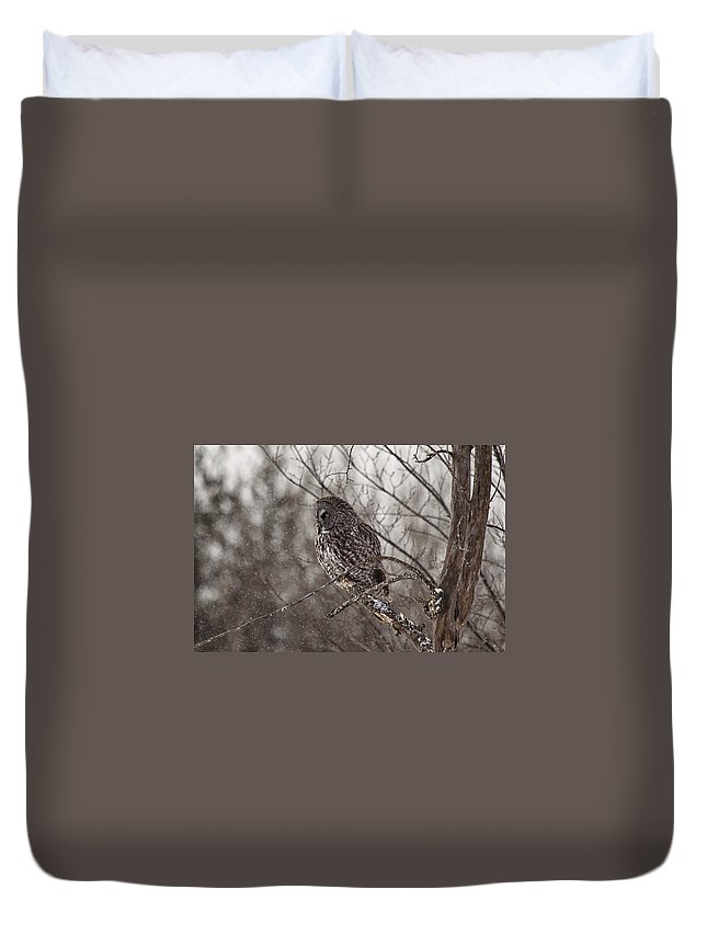 Great Grey Owl Duvet Cover featuring the photograph Contemplating Winter by Eunice Gibb