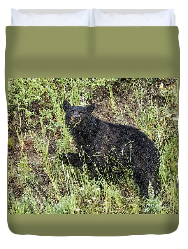Bear Duvet Cover featuring the photograph Contemplation by Claudia Kuhn
