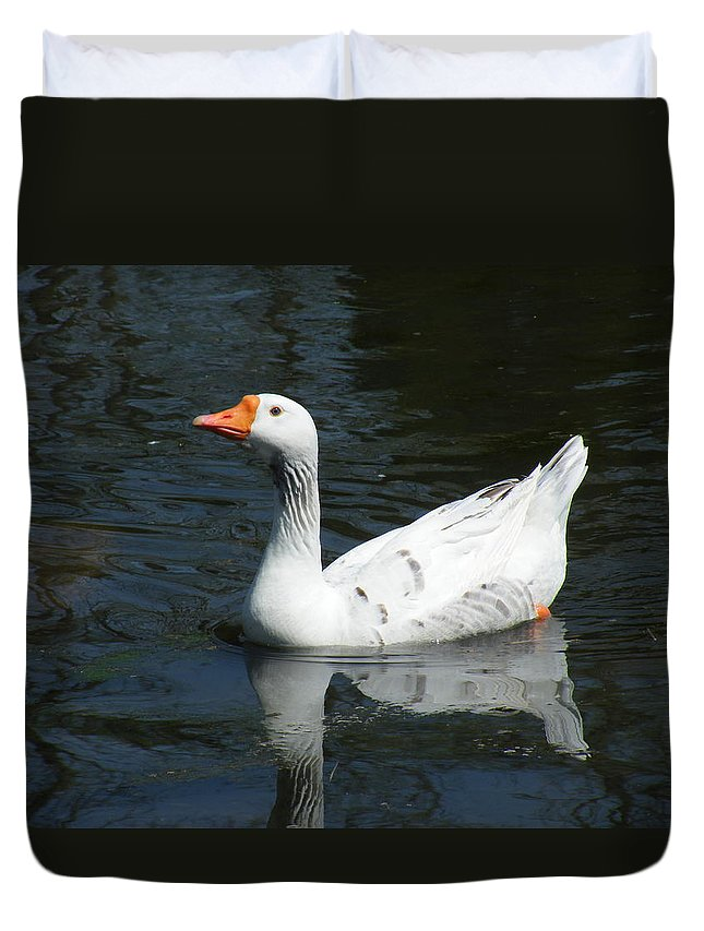Photography Duvet Cover featuring the photograph Contrasting Goose by Gilbert Pennison