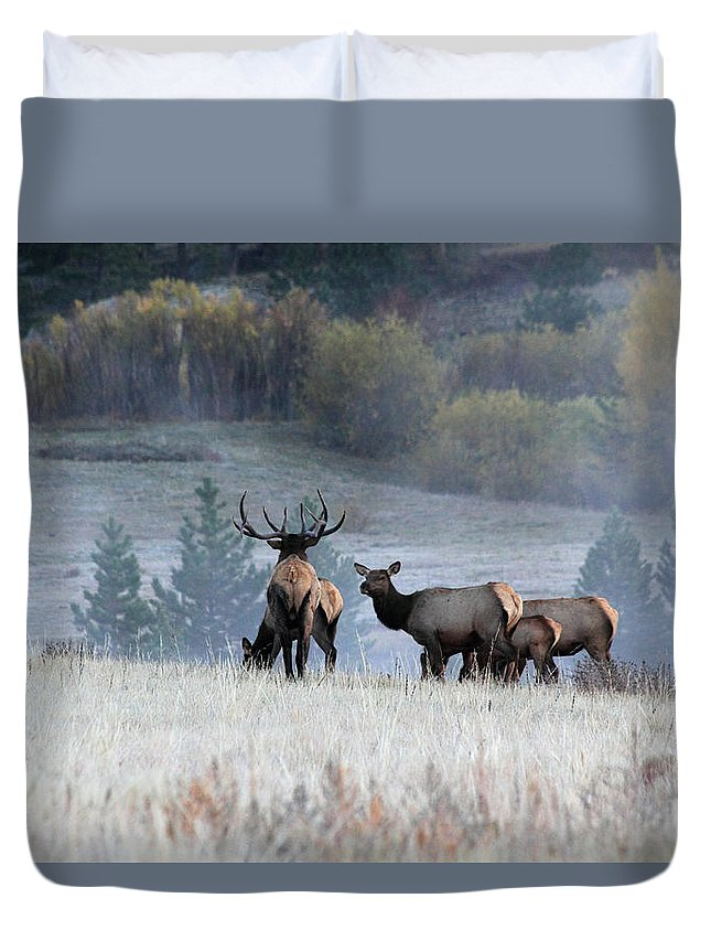 Elk Duvet Cover featuring the photograph Cool Misty Morning by Shane Bechler