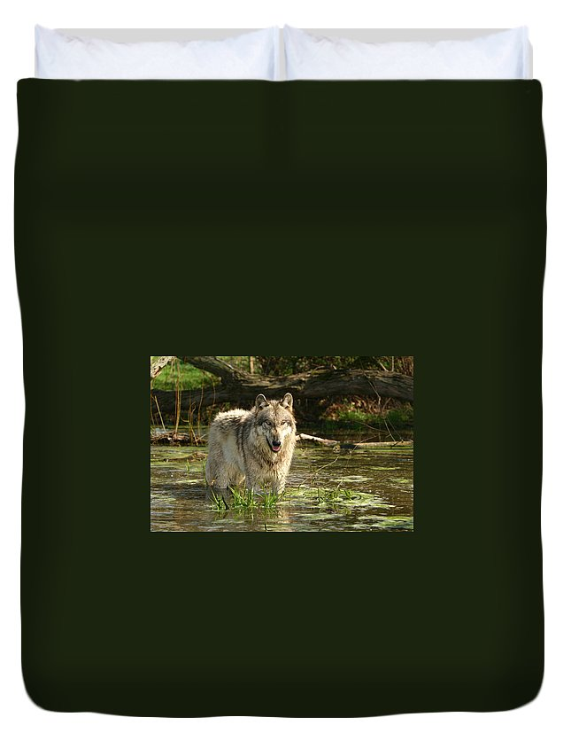 Gray Wolf Duvet Cover featuring the photograph Cooling Off by Shari Jardina