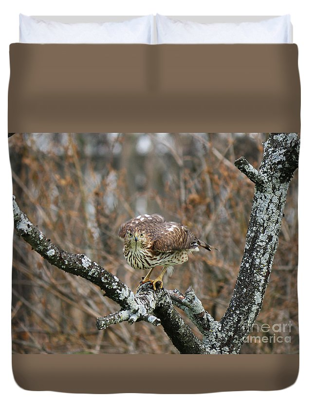 Cooper's Hawk Duvet Cover featuring the photograph Coopers Hawk 0750 by Jack Schultz