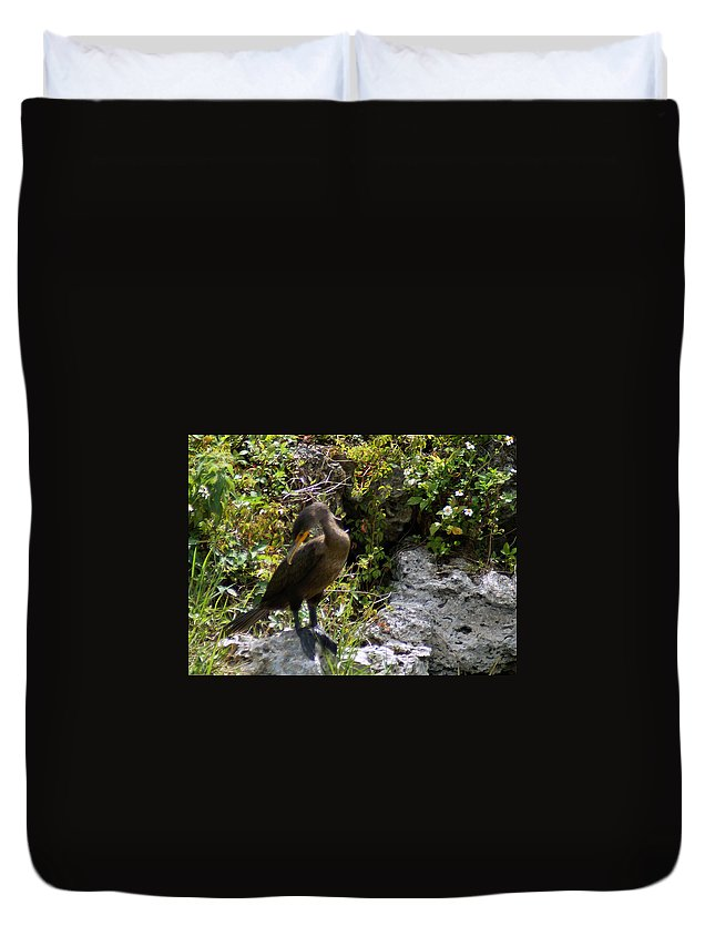 Cormorants Duvet Cover featuring the photograph Cormorants-one by Miguel Hernandez