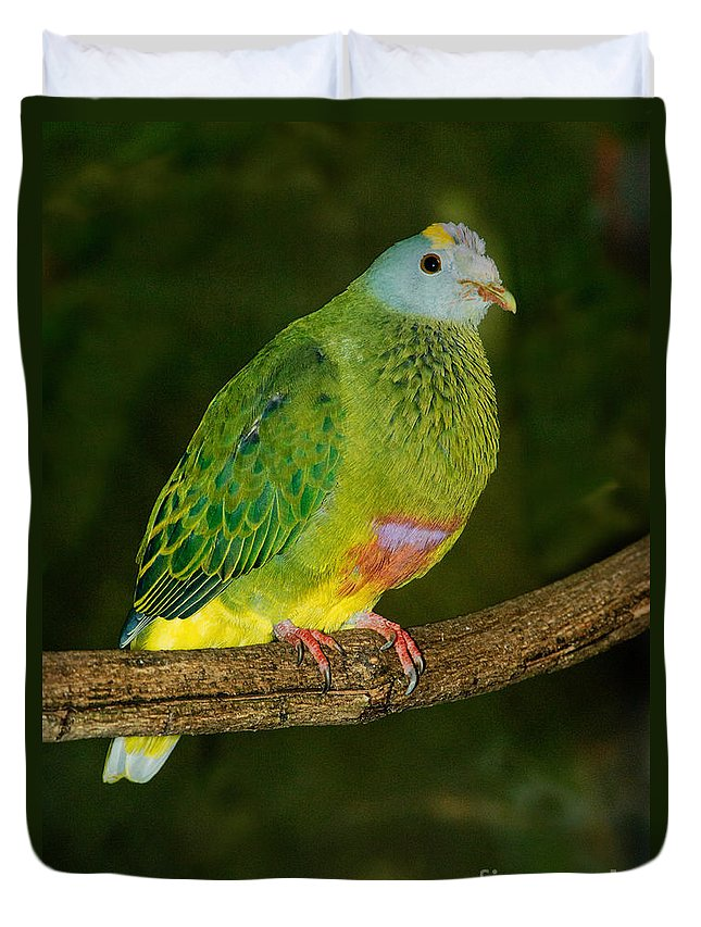 Animal Duvet Cover featuring the photograph Coronated Fruit Dove by Anthony Mercieca