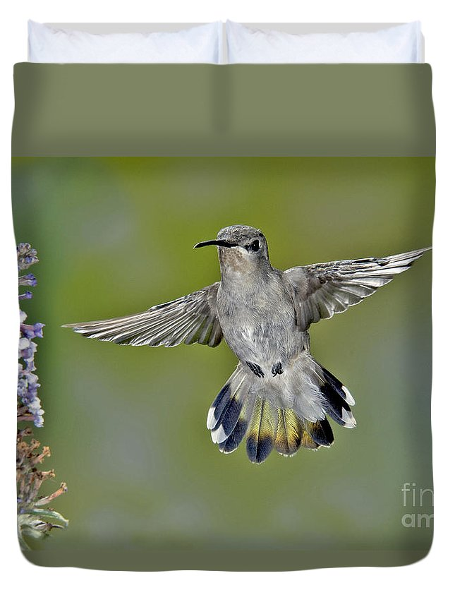 Costa's Hummingbird Duvet Cover featuring the photograph Costas Hummingbird by Anthony Mercieca