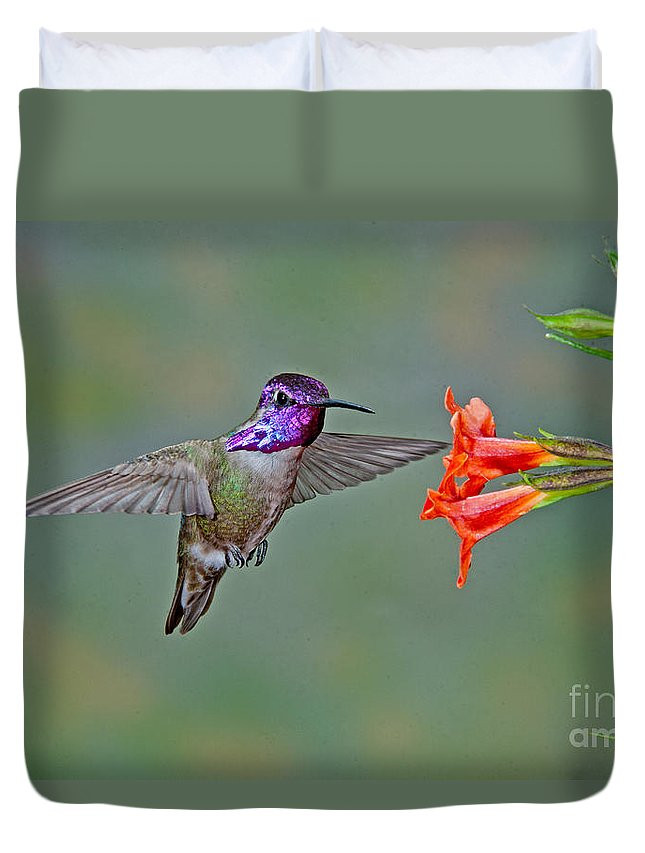 Animal Duvet Cover featuring the photograph Costas Hummingbird At Flower by Anthony Mercieca