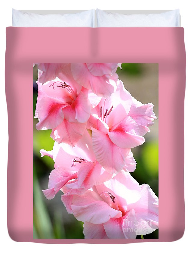 Glads Duvet Cover featuring the photograph Cotton Candy Gladiolus by Carol Groenen