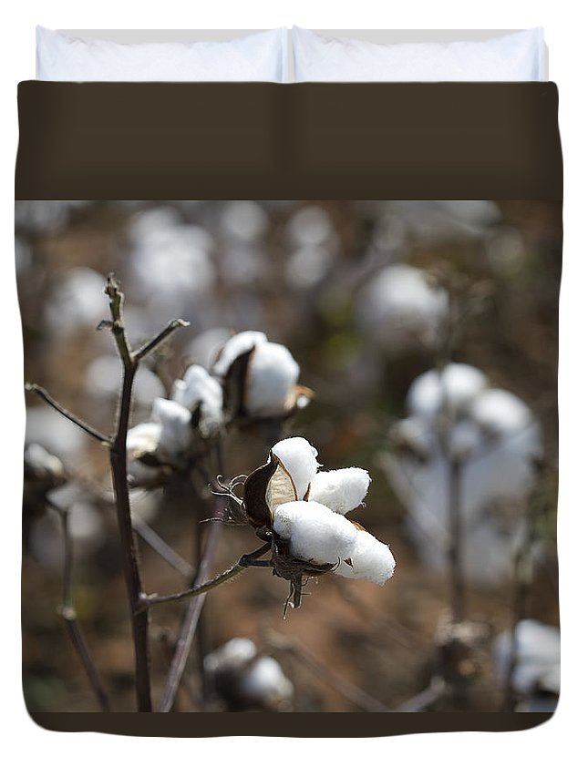 Cotton Duvet Cover featuring the photograph Cotton Southern Gold by Kathy Clark