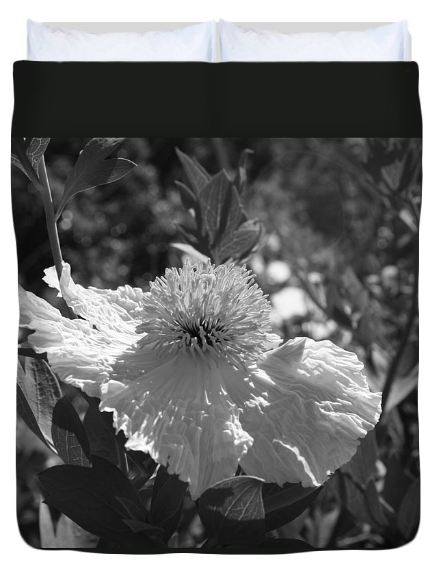Coulters Matilija Poppies Duvet Cover featuring the photograph Coulter's Matilija Poppy 2 by Ellen Henneke